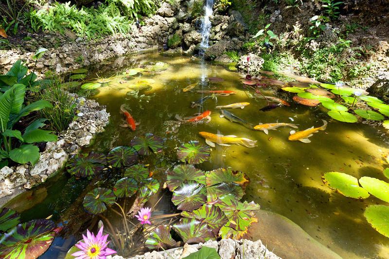 BB364 Koi Pond