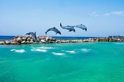 Jamaican Dolphins