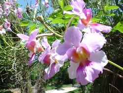 Manati Park Orchids