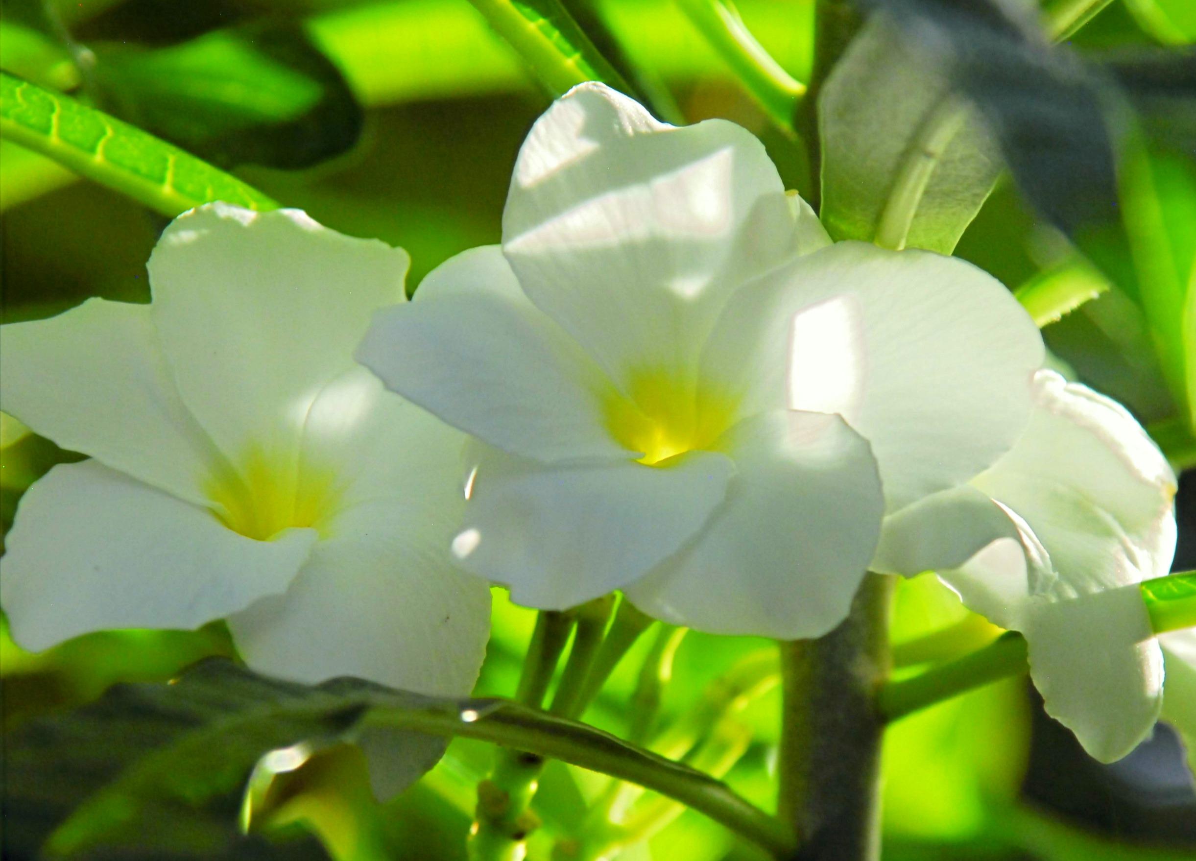 SM399 White Flowers