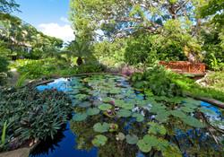 BB366 Lily Pond