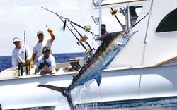 Marlin Fishing off Bimini
