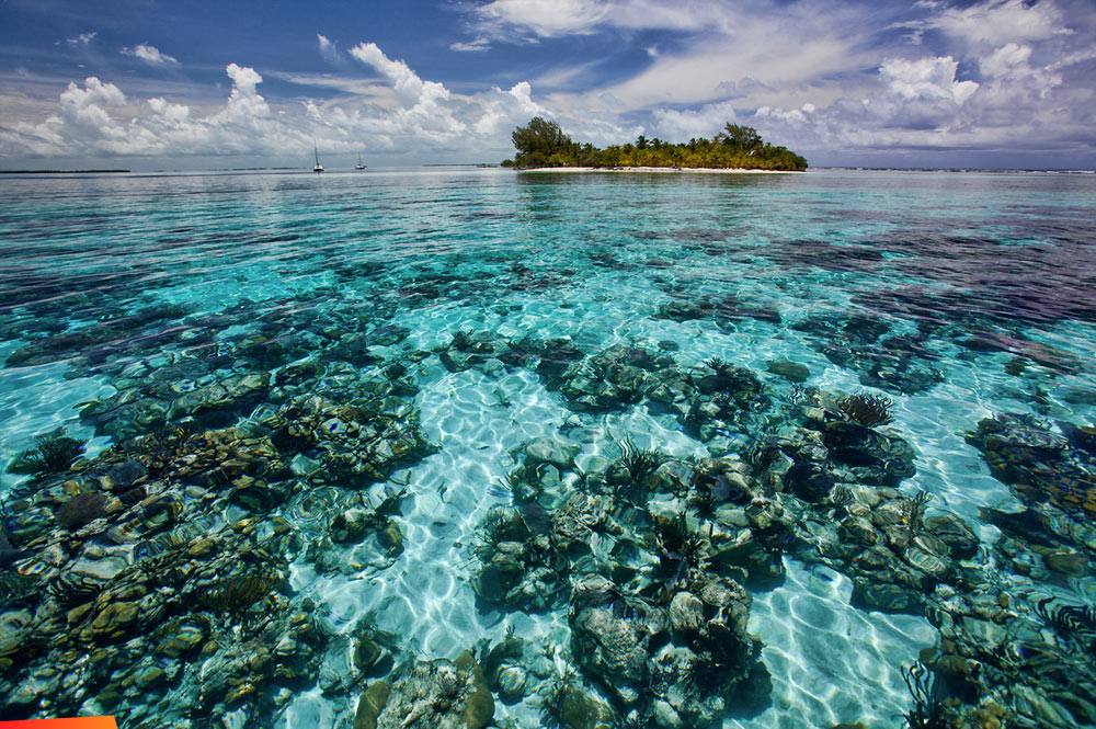 Coral Reefs, South Water Caye