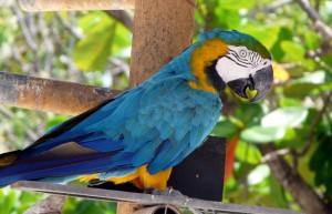 Macaw, Sint Maarten Zoo