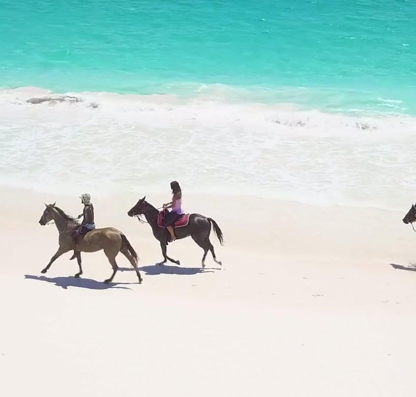 Bahamian Horses