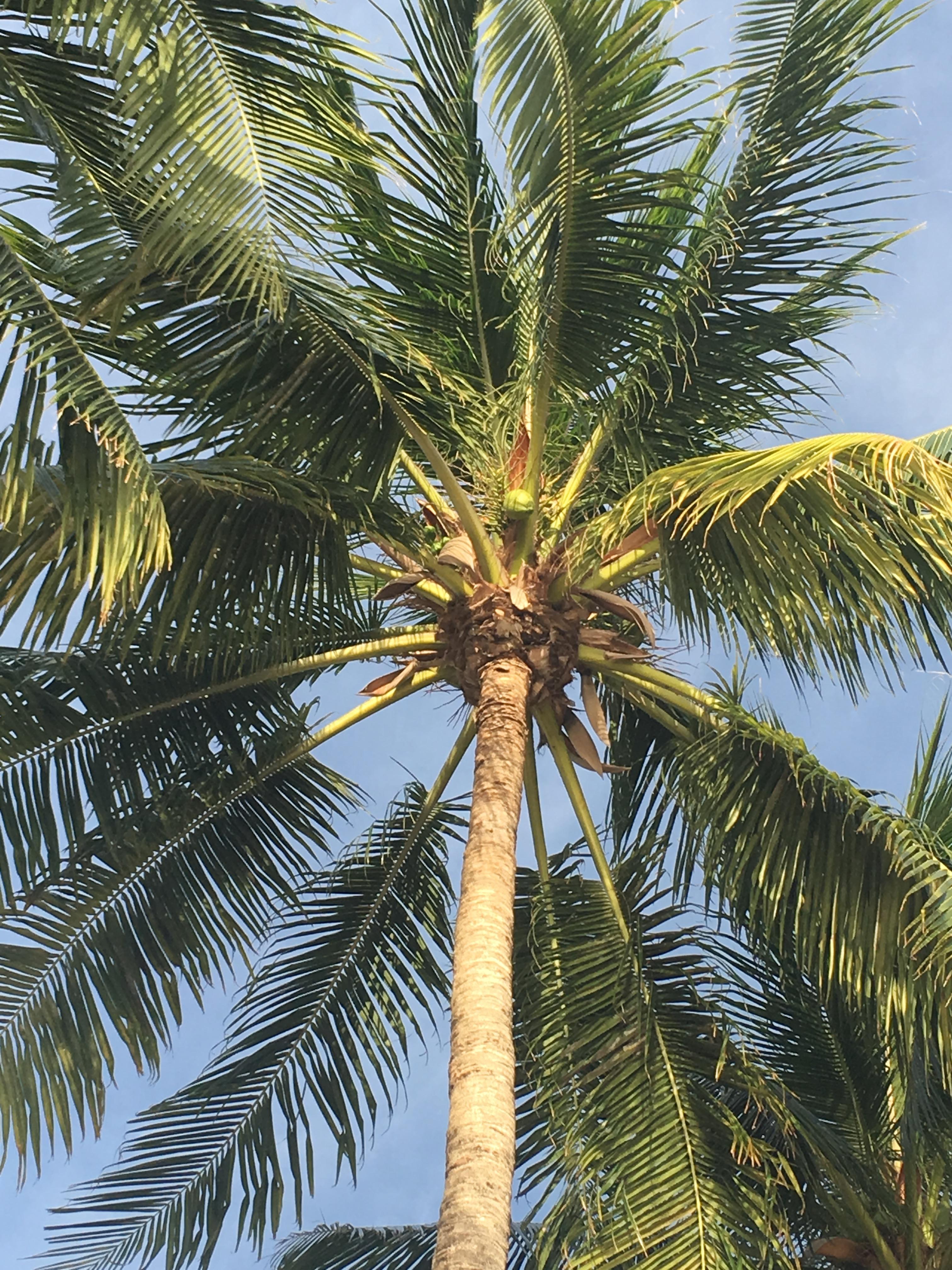 Palm Tree on Dover Beach