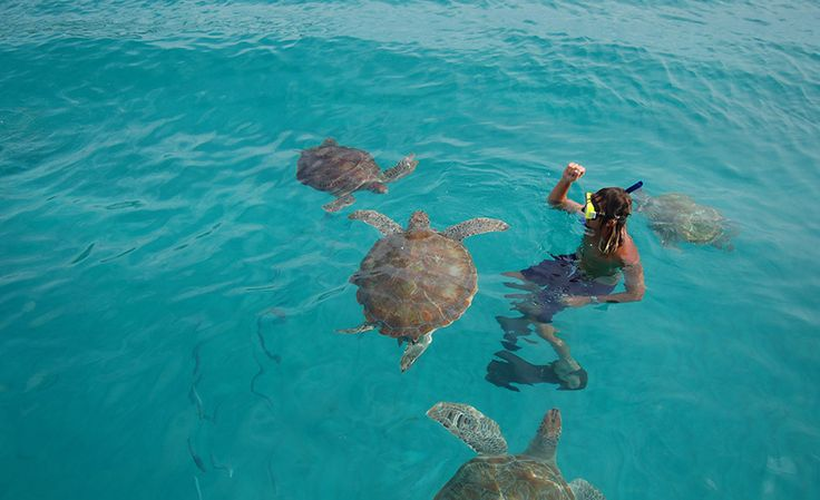 Barbados Seaturtles