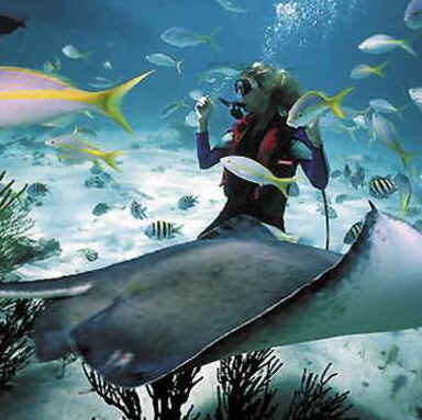 Diving with Sting Rays