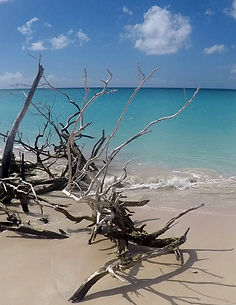 Barbuda-3.jpg