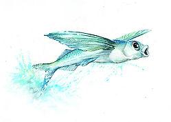 FlyingFish5.jpg