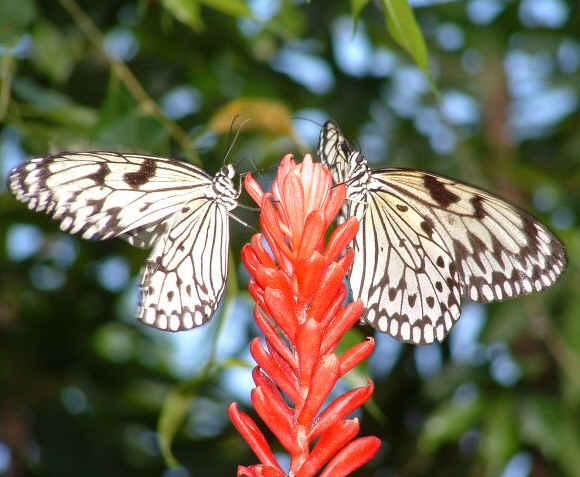Sint Maarten Butterfly Farm