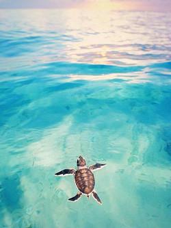 sea-turtle-4