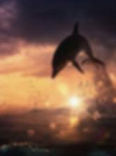 dolphin_sunset_1.jpg