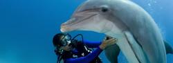 Bahamas TTD Diving