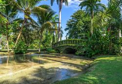 JM231 Lush Tropical Foliage