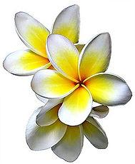frangipani5.jpg
