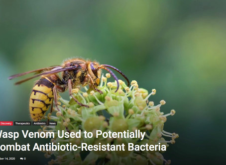 Penn Medicine researchers use Wasp Venom to potentially combat antibiotic-resistant bacteria.
