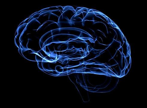 neurology-human-brain.jpg