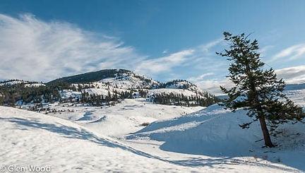 winter scene 6.jpg