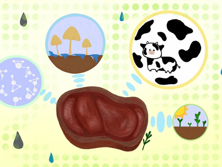 Synthetic Meat Fighting Against Climate Change