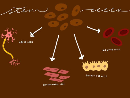 Stem Cell Usage: the Good and the Bad