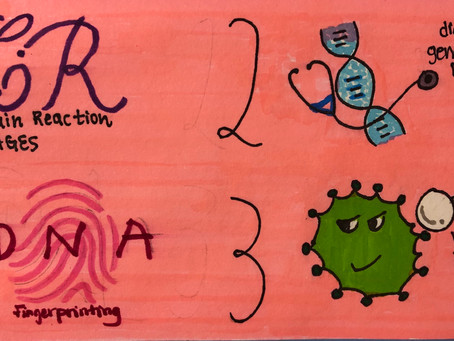 The Process of PCR