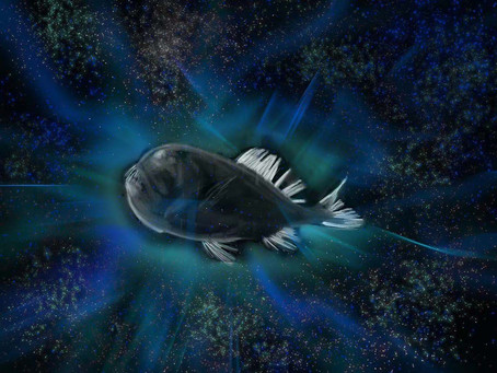 The Mysterious Disappearance of the Ultra-Black Fish
