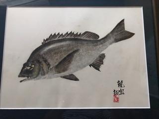 102_クロダイ