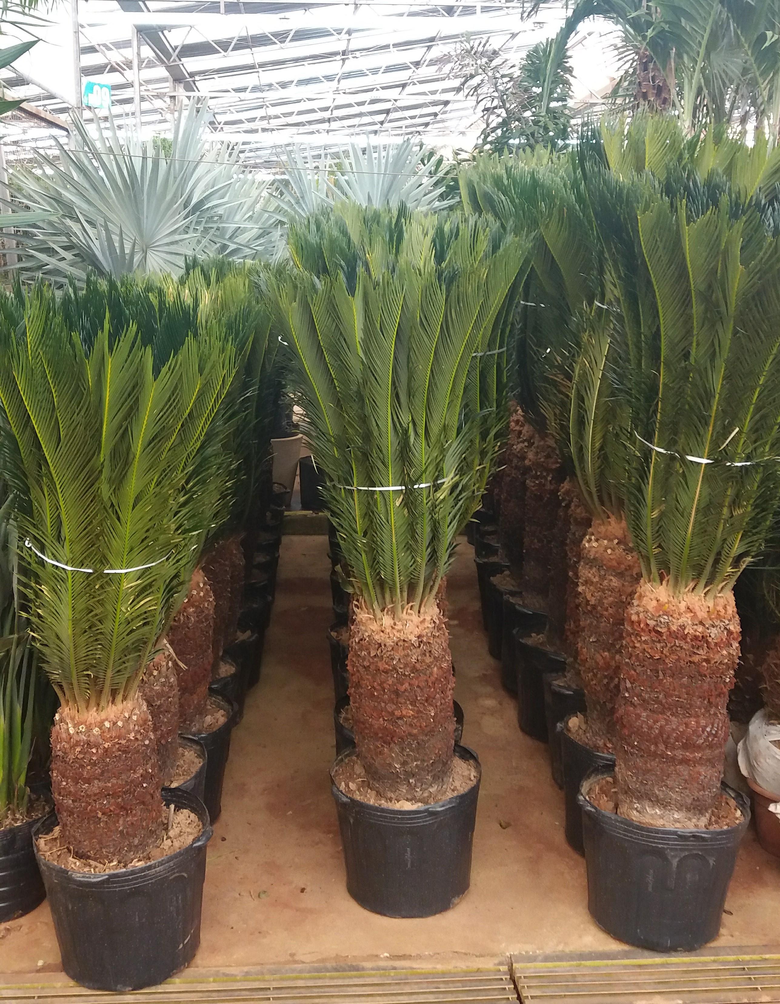 plantas campinas