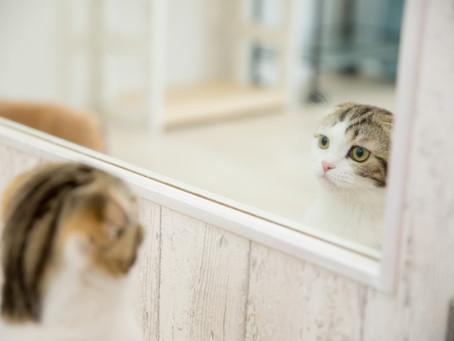 鏡よ鏡よ鏡さん。