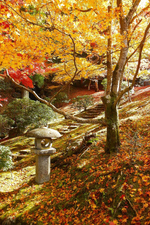 Nov_Kyoto_Shugakuin
