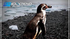 Pinguins de Chinelo 🐧