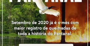 Pantanal em Chamas 🔥 - Doe e Ajude