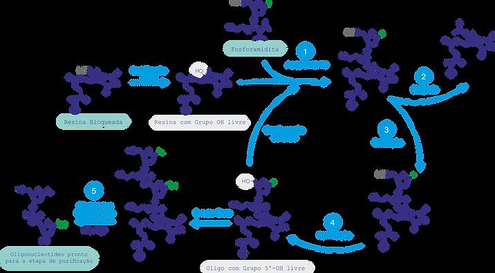 Ciclo Sintético (2).png