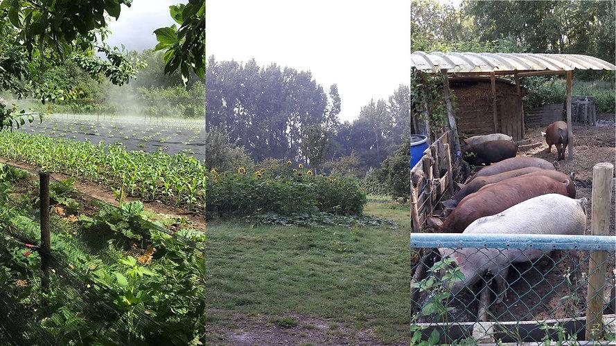 website oplaad-dag op een CSA boerderij.