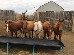 2015 Foals