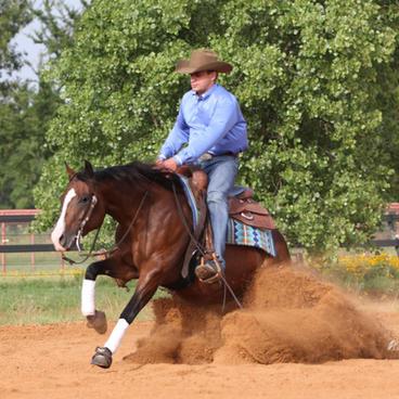 Perfect Equine
