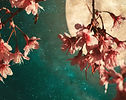 moon blossoms yoga nidra-01.jpg