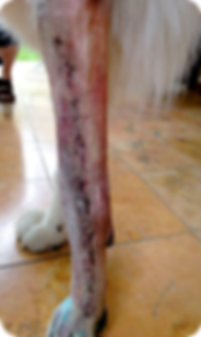 Osteosarcoma_06.png