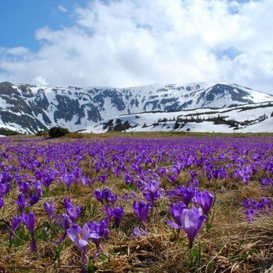 Spring Weed Retreat