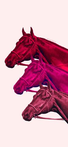 'POP ART MENASCO HORSES'