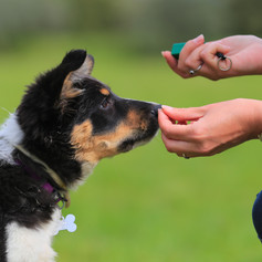 Dog Training Tools and Accessories