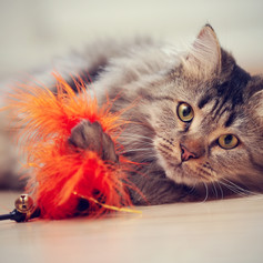 Cat Toys and Games