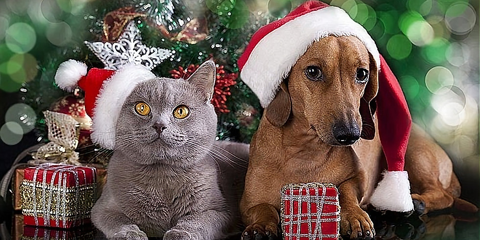 WIN a personalized Christmas hamper for YOUR pet...
