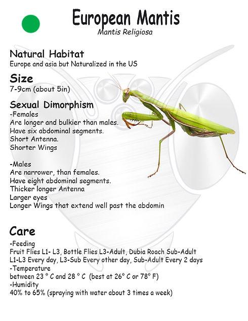 European Mantis care sheet.jpg