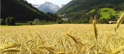 vacanze in Alto Adige Valle Aurina