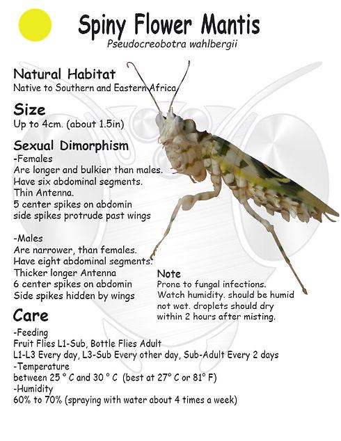Spiny Flower Mantis care sheet.jpg