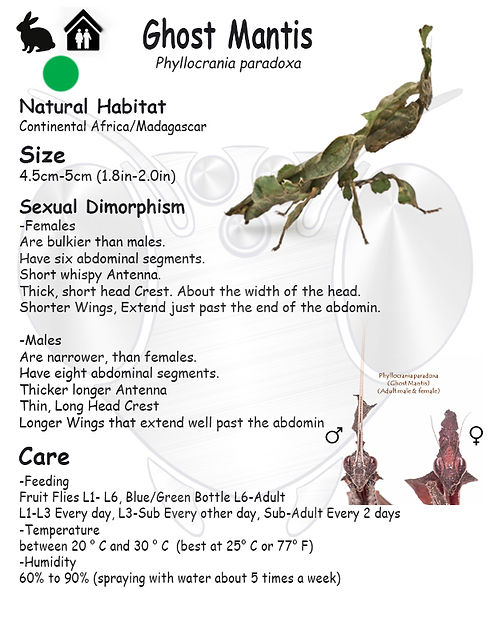 Ghost Mantis care sheet.jpg