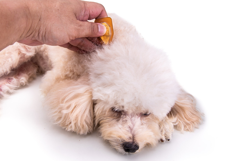 essential oil on dog for ticks