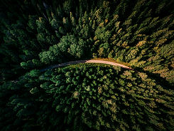 tree-forest-road-flower-green-jungle-826